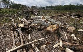 Защита по экологическим преступлениям